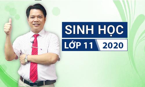Sinh học 11 khóa 2020 - Thầy Phan Khắc Nghệ
